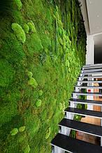 Вертикальное озеленение стабилизированным мхом и растениями .