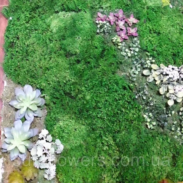 Панно з моху і рослин.