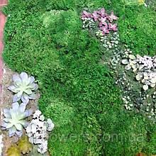 Панно из мха и растений.