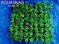 Растение  коврик (25*25*2)см