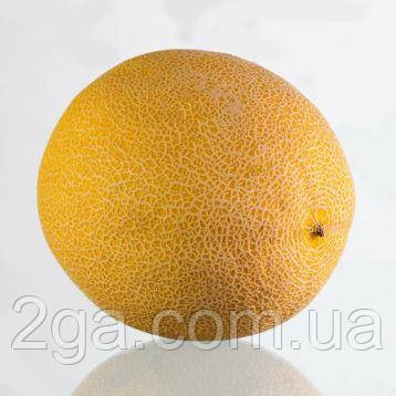 КС 33 F1 / KS 33 F1 — Дыня, Kitano Seeds.1000 семян