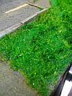 Імітація трави, флок для діорам, мініатюр, 5 мм, 5 гр, фото 2