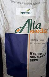 Семена подсолнечника Хайсан 231 ХО