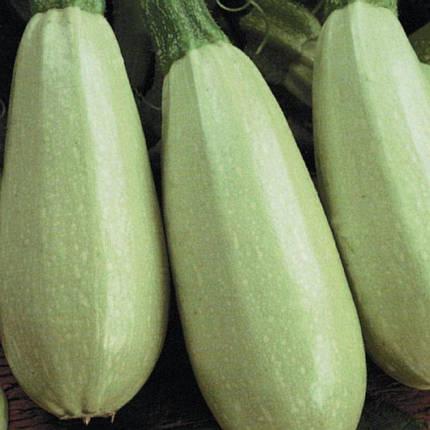 Семена Кабачок Грибовский 20 сем W.Legutko (2516), фото 2