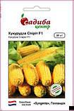 Спирит F1 20 шт семена кукурузы Syngenta Голландия, фото 2