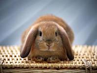 Безопасность применения антибиотиков у кроликов.
