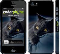 "Чохол на iPhone 5s Димчастий кіт ""825c-21"""