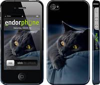 "Чехол на iPhone 4 Дымчатый кот ""825c-15"""