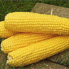 Семена Кукуруза сахарная Деликатесная 10 гр W.Legutko 2528