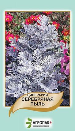 Семена Цинерария Серебряная пыль 0,1 г W.Legutko 5171, фото 2