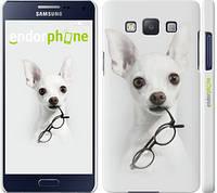 """Чехол на Samsung Galaxy A5 A500H Собака с очками """"2891c-73"""""""