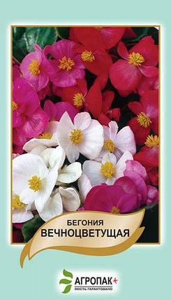 Семена Бегония вечноцветущая смесь 0,01 г W.Legutko 5040, фото 2