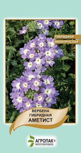 Вербена гібридна низькоросла Аметист 0,1 г W. Legutko 5046