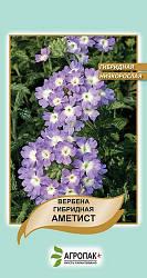 Семена Вербена гибридная низкорослая Аметист 0,1 г W.Legutko 5046