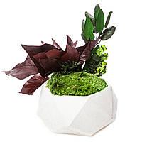 Кашпо полігон з моху