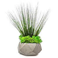 Кашпо з моху і рослин