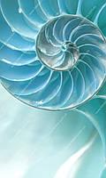 Фотообои на флизелиновой основе - Голубая раковина(ширина рулона -1,03м)