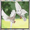 """Картины по номерам, холст на подрамнике, Птицы """"Белоснежные голуби"""" 40*40 см, без коробки"""