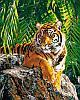 Набор-раскраска по номерам Суматранская тигрица Худ Страйблинг Девид