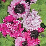 Семена петунии Черниго Триумф Cerny Чехия 10 шт, фото 2