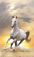 Фотообои на флизелиновой основе - Белая лошадь (ширина рулона -1,03м)