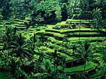 Отдых на Филиппинах (Филиппинских островах) из Днепра / туры на Филиппины из Днепра, фото 5