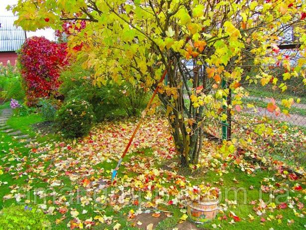 Лунный календарь посадок и садово-огородных работ. Сентябрь-2015