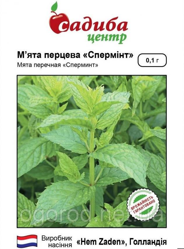 Семена мяты Сперминт 0,1 грамм Hem Zaden Голландия