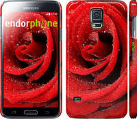 "Чехол на Samsung Galaxy S5 Duos SM G900FD Красная роза ""529c-62"""