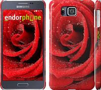 "Чехол на Samsung Galaxy Alpha G850F Красная роза ""529c-65"""