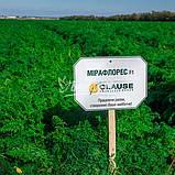 Семена моркови МИРАФЛОРЕС F1, 100.000 семян, фото 4