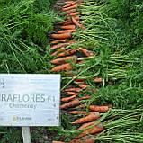 Семена моркови МИРАФЛОРЕС F1, 100.000 семян, фото 3