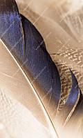 Фотообои на бумажной основе - Бежевые перья (ширина -1,27)