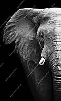 Фотообои на бумажной основе - Слон на черном фоне (ширина -1,27)