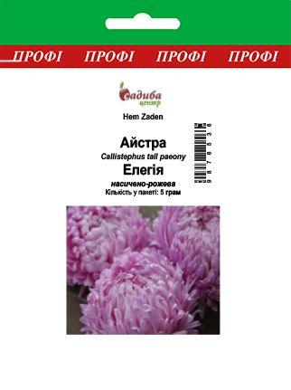 Астра Елегія, насичено-рожева, 5 м Садиба Центр