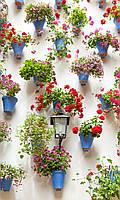 Фотообои на бумажной основе - Горшки с цветами (ширина -1,27)
