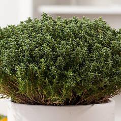 Семена Тимьян обыкновенный (чабрец) 0,1 гр W.Legutko (2598)