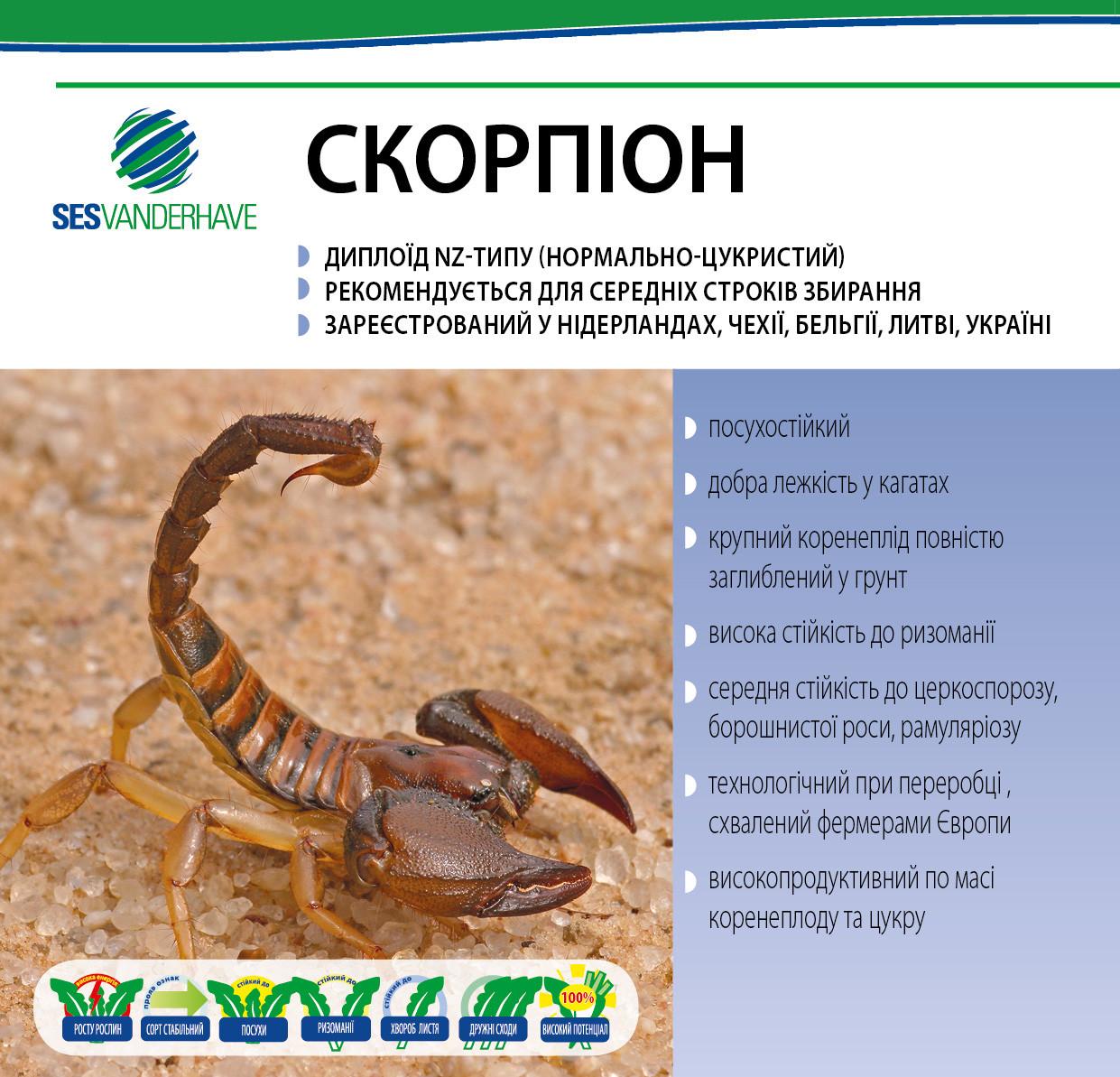 Скорпион семена сахарной свеклы / насіння цукрового буряка Скорпіон SESVanderHave стандарт