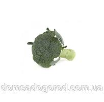 Капуста брокколі ОРАНТЕС F1 | ORANTES F1 Rijk Zwaan (поліпшені насіння) 2500 шт