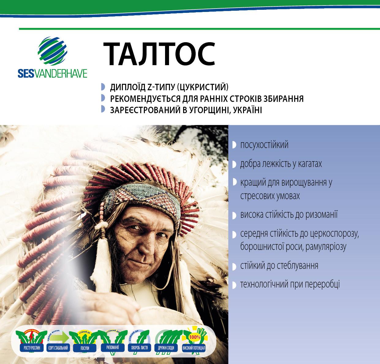 Талтос семена сахарной свеклы / насіння цукрового буряка Талтос  SESVanderHave 100000 нас. стандарт