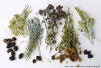 Предоставляем услуги сушки растительного сырья (Температура от 20 ° С до 340 ° С)