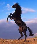 Опыт применения противовоспалительных препаратов и хондропротекторов при лечении артритов у лошадей.