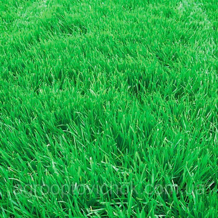 Семена трава овсяница вівсяниця  1кг