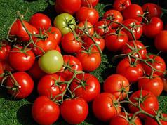 Семена Томат Шаста F1 50 сем Lark Seeds 2243