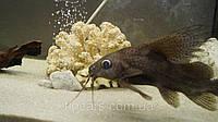 Грунт (кварцевый) для аквариума