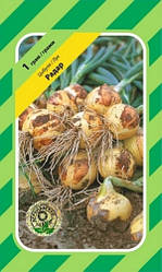 Семена Лук озимый Радар 1 г Bejo Zaden (2147)