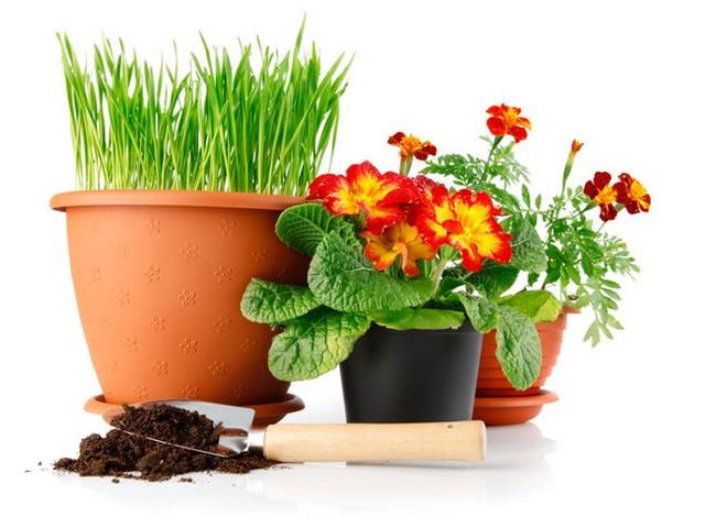 Товары для комнатных растений