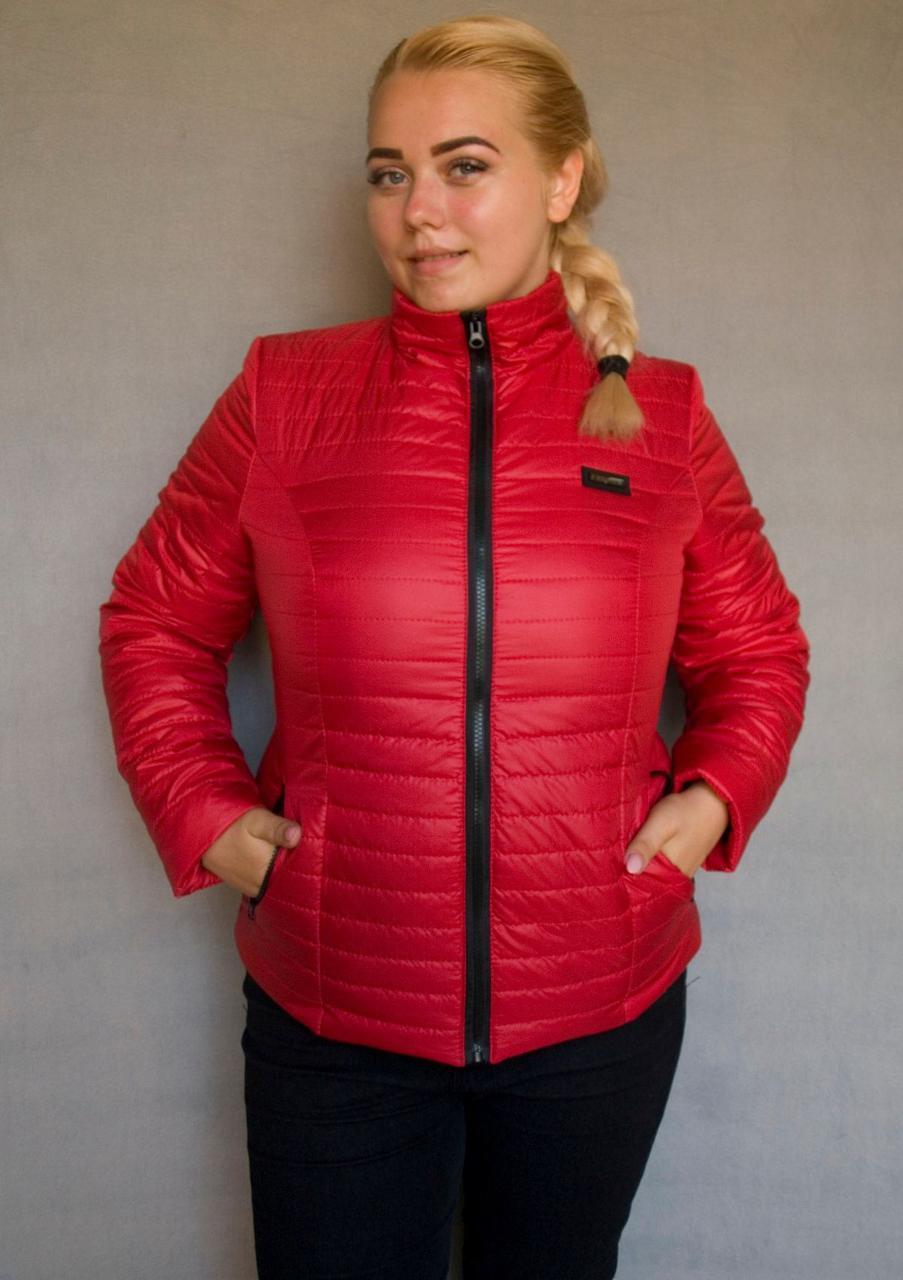 Куртка женская Батал весна осень