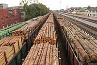 В Україні в майбутньому пропонують створити ринок лісу.
