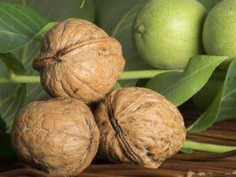 Грецкий орех Великан, двухлетний, фото 2